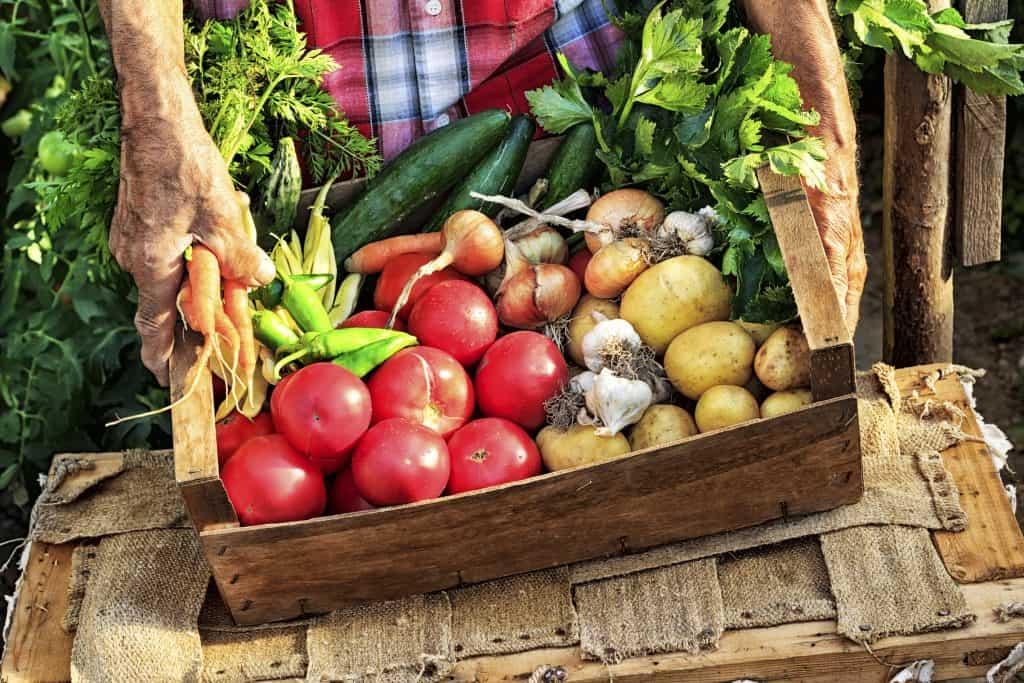 Queen Creek Real Estate Market | Organic Farm